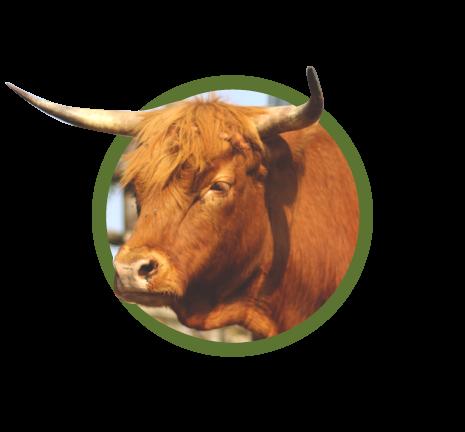 carne highland