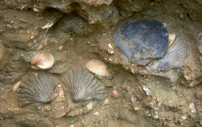 distretto paleontologico del monferrato